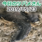 Thumbnail of related posts 066