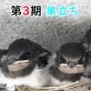 Thumbnail of post image 090