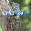 Thumbnail of post image 138