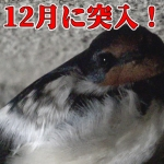 Thumbnail of related posts 075