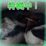 Thumbnail of related posts 083