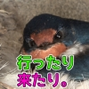 Thumbnail of post image 165