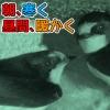 Thumbnail of post image 000