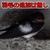 Thumbnail of post image 079