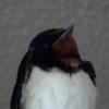 Thumbnail of post image 021