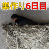 Thumbnail of post image 186