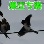 Thumbnail of related posts 042